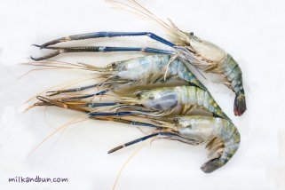 Raw Scampi