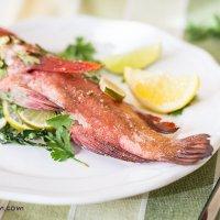 Fish. Arabian red grouper